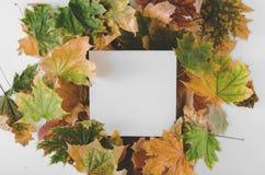 Carta in bianco con le foglie variopinte di autunno asciutto su fondo bianco fotografia stock libera da diritti