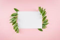 Carta in bianco con le foglie verdi fresche isolate sul rosa Immagini Stock