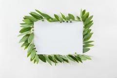 Carta in bianco con le foglie verdi fresche su bianco Immagini Stock