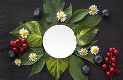 Carta in bianco del Libro Bianco con le margherite, le foglie, il ribes rosso ed i mirtilli immagine stock