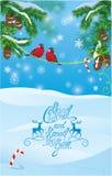 Carta con i rami di albero dell'abete e gli uccelli del ciuffolotto su blu-chiaro Fotografia Stock