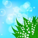 Carta con il campo dei fiori del mughetto Immagine Stock Libera da Diritti