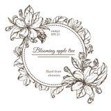 Carta d'annata con i fiori del giardino Fiori disegnati a mano di melo Ciliegia di fioritura dei rami dell'illustrazione di vetto Fotografia Stock