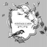 Carta d'annata con i ramoscelli della betulla ed il capezzolo dell'uccello Fotografia Stock