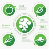 A carta da árvore vai projeto liso verde Ilustração Stock