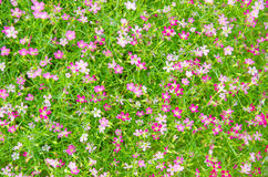 carta da parati del fiore Fotografie Stock Libere da Diritti