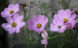 carta da parati del fiore Fotografia Stock