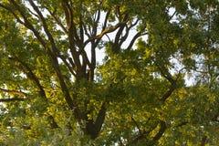 Carta da parati dell'albero Fotografie Stock