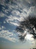 Carta da parati dell'albero Immagini Stock