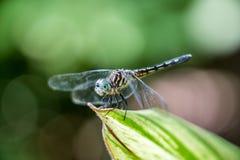 Carta da parati della libellula dell'insetto, luce solare luminosa, primo piano, natura, bellezza, vegetazione Fotografia Stock