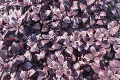 Carta da parati della natura, fondo floreale, cartoline d'auguri Fotografie Stock