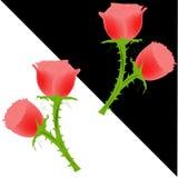 Carta da parati della rosa rossa Fotografia Stock