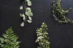 Carta da parati delle foglie delle piante su fondo nero Fotografia Stock Libera da Diritti
