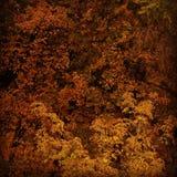 Carta da parati di autunno Fotografia Stock