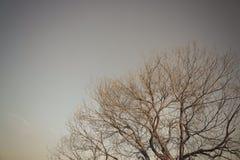 Carta da parati di seppia della foresta dell'albero Fotografia Stock