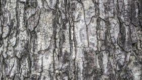 Carta da parati di struttura della corteccia di albero Immagine Stock Libera da Diritti