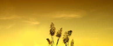 Carta da parati e fondo gialli del cielo della siluetta Fotografie Stock Libere da Diritti