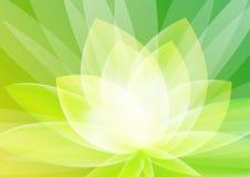 Carta da parati floreale verde astratta del fondo Fotografia Stock Libera da Diritti