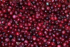Carta da parati fresca dell'uva di monte Immagini Stock