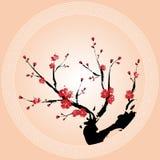 Carta da parati orientale del fiore della prugna Fotografia Stock Libera da Diritti