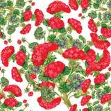 Carta da parati senza cuciture floreale nello stile dell'acquerello Immagini Stock Libere da Diritti