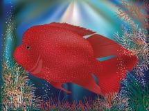 Carta da parati subacquea con il pesce tropicale rosso Immagini Stock Libere da Diritti
