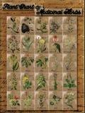 Carta da planta das ervas medicinais 1 Fotografia de Stock