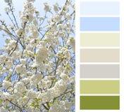 Carta de color floreciente Fotografía de archivo