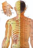 Carta de la acupuntura - medicina alternativa   Imágenes de archivo libres de regalías