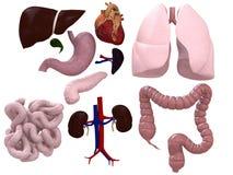 Carta de los órganos stock de ilustración