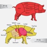 Carta de los órganos internos y de los cortes del cerdo básico Imagen de archivo libre de regalías