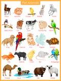 Carta de los animales de animal doméstico stock de ilustración