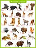 Carta de los animales salvajes de A a de Z ilustración del vector