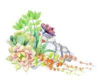 Carta dei succulenti dell'acquerello Fotografia Stock Libera da Diritti