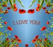 Carta del biglietto di S. Valentino come cuore con i papaveri nell'incandescenza del ` s del sole (14 febbraio, Immagine Stock Libera da Diritti