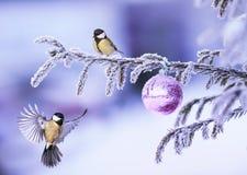 Carta del nuovo anno con due bei uccelli del capezzolo che pilotano sull'il Natale immagine stock