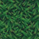Carta del ramo del pino Fotografia Stock