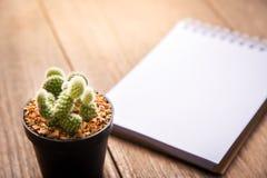 Carta del taccuino e del succulente in vaso sullo sfondo naturale di natura morta di legno della tavola, piante del cactus su fon Fotografia Stock Libera da Diritti