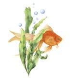 Carta dell'acquario dell'acquerello Stampa subacquea dipinta a mano con il pesce rosso, il ramo dell'alga e le bolle di aria isol illustrazione vettoriale