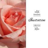 Carta dell'invito con un pallido - rosa di rosa Priorità bassa della foto ENV, JPG Fotografia Stock