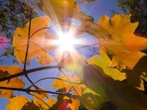 Carta della carta della carta di autunno leaves_2 del sole di autunno Fotografia Stock Libera da Diritti