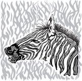 Carta della zebra Immagini Stock