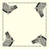 Carta della zebra Fotografia Stock Libera da Diritti