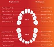 Carta dental de los niños Foto de archivo