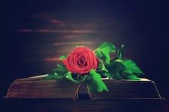 Carta di condoglianza con la rosa rossa sul libro fotografia stock