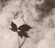 Carta di condoglianza - fiore asciutto Fotografia Stock