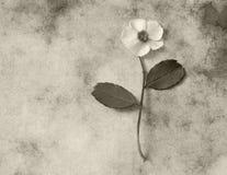 Carta di condoglianza - fiore bianco fotografia stock