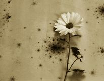Carta di condoglianza - fiore bianco Fotografie Stock