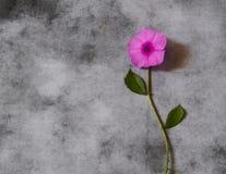 Carta di condoglianza - fiore viola Fotografia Stock Libera da Diritti