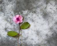 Carta di condoglianza - fiore viola Immagini Stock